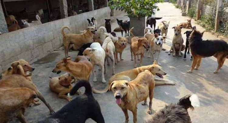 Telangana 22 dogs killed